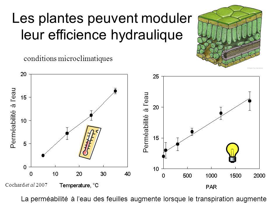 Les plantes peuvent moduler leur efficience hydraulique