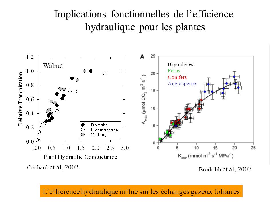 Implications fonctionnelles de l'efficience