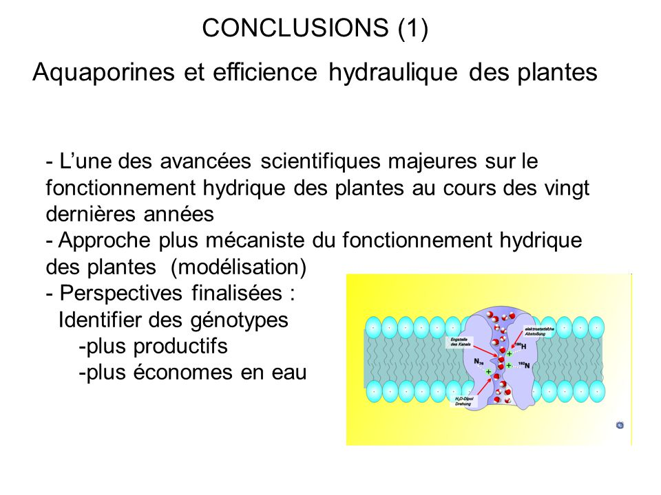 Aquaporines et efficience hydraulique des plantes