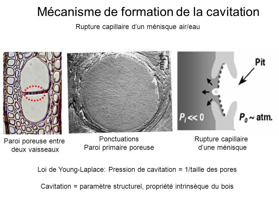 Mécanisme de formation de la cavitation