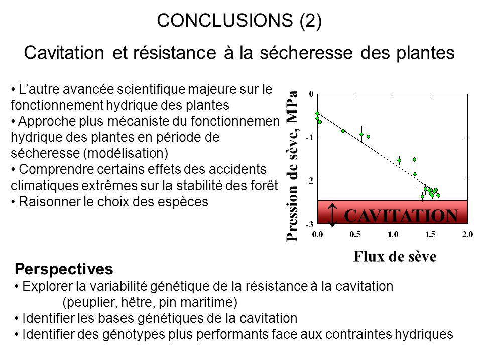 Cavitation et résistance à la sécheresse des plantes