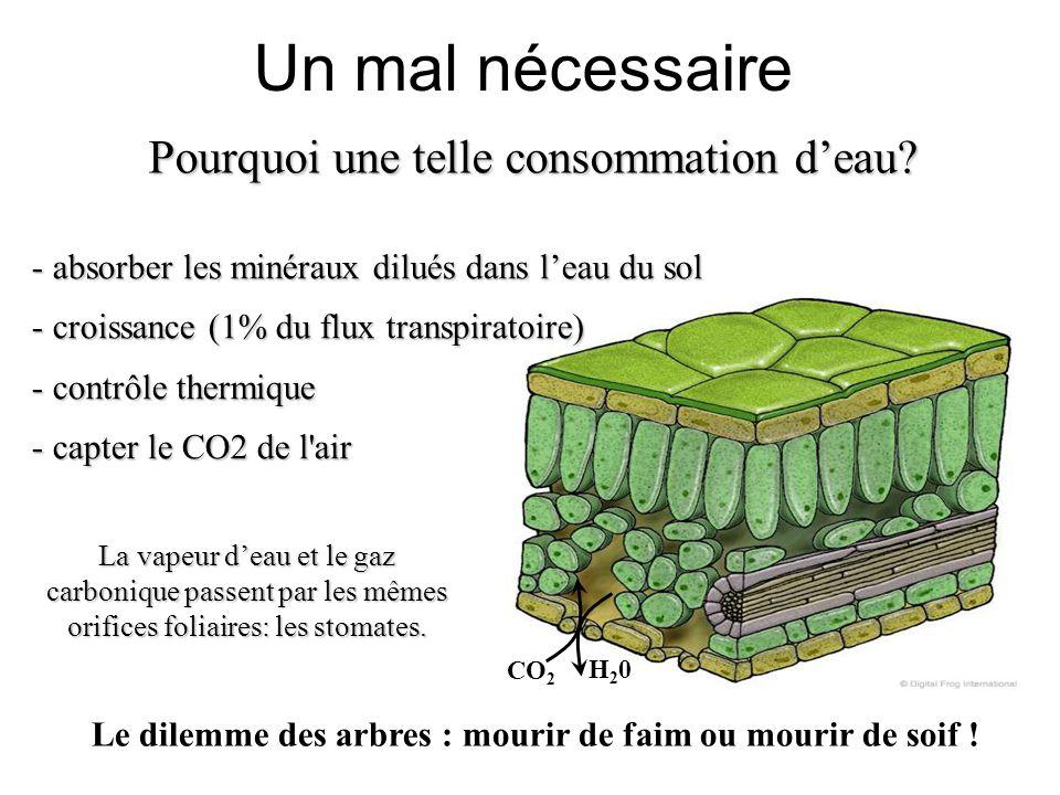 Le dilemme des arbres : mourir de faim ou mourir de soif !