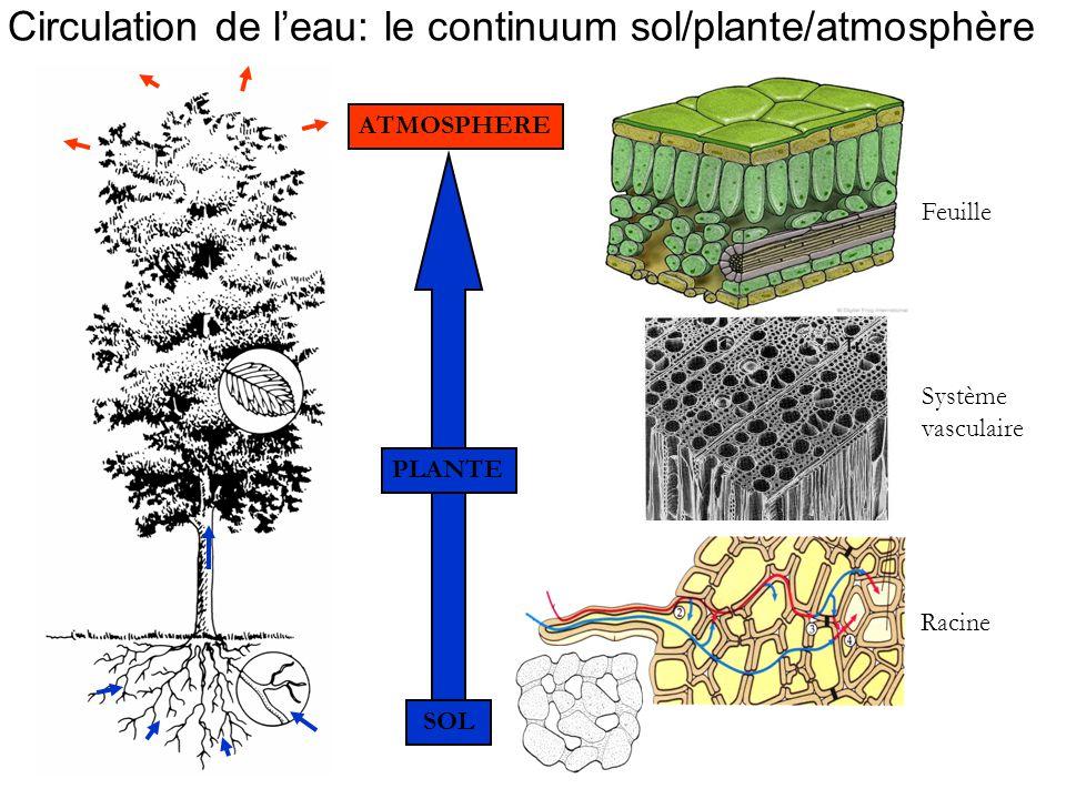 Circulation de l'eau: le continuum sol/plante/atmosphère