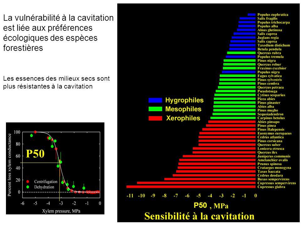 P50 La vulnérabilité à la cavitation est liée aux préférences