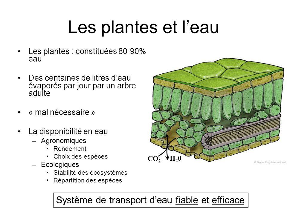 Les plantes et l'eau Système de transport d'eau fiable et efficace