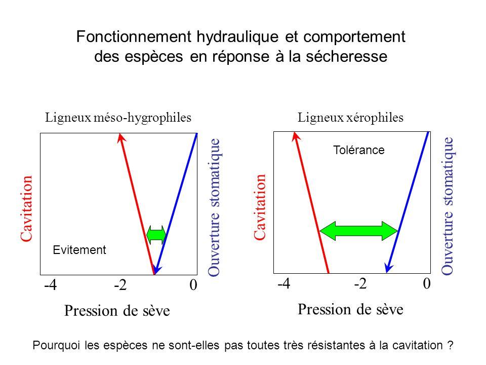 Fonctionnement hydraulique et comportement des espèces en réponse à la sécheresse