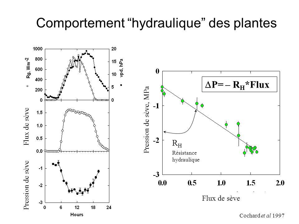 Comportement hydraulique des plantes