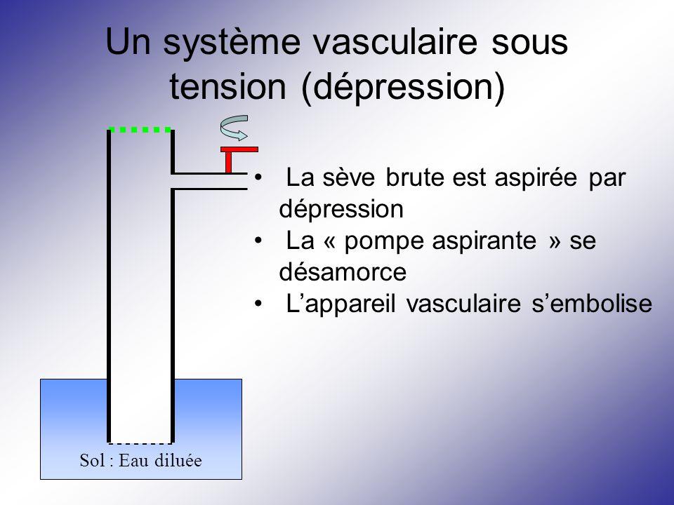 Un système vasculaire sous tension (dépression)