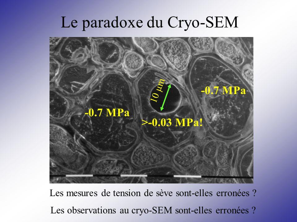Le paradoxe du Cryo-SEM
