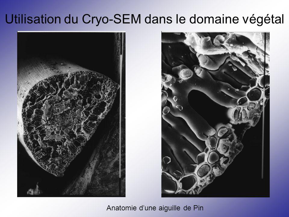 Utilisation du Cryo-SEM dans le domaine végétal