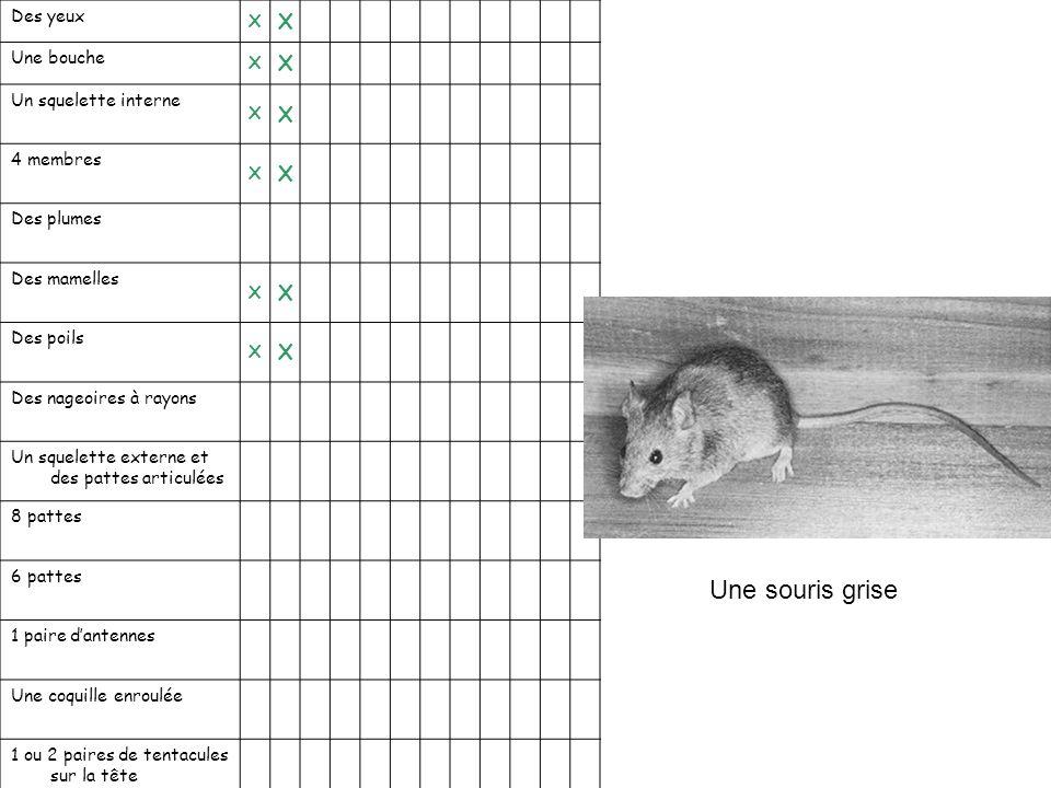 Une souris grise X Des yeux Une bouche Un squelette interne 4 membres