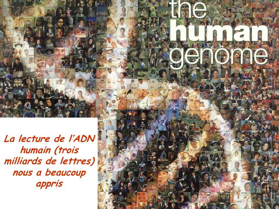 La lecture de l'ADN humain (trois milliards de lettres) nous a beaucoup appris