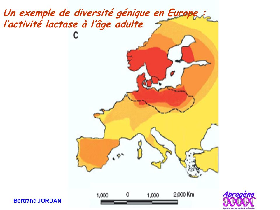Un exemple de diversité génique en Europe :