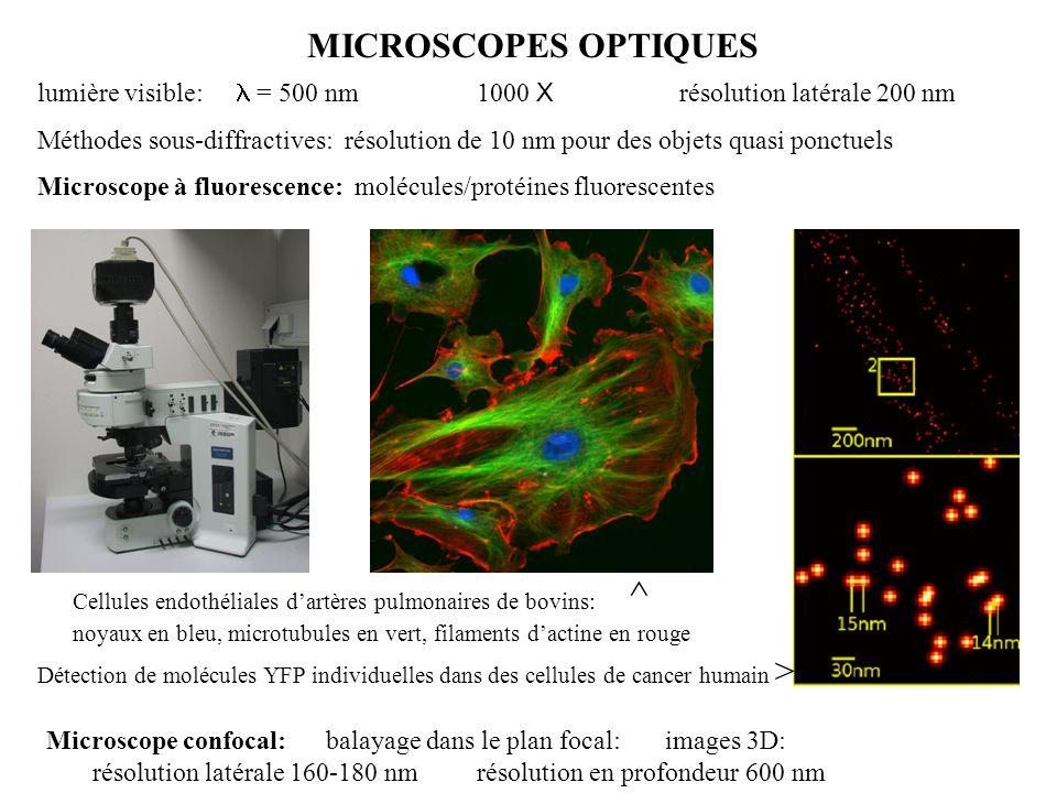 MICROSCOPES OPTIQUES lumière visible: l = 500 nm 1000 X résolution latérale 200 nm.