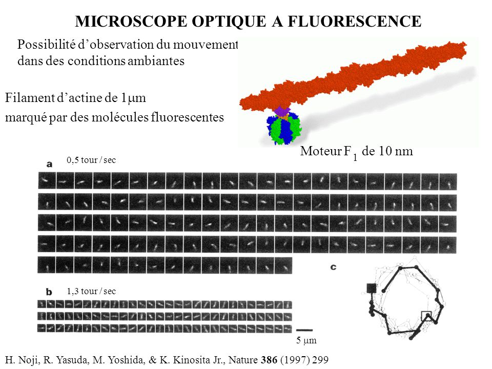MICROSCOPE OPTIQUE A FLUORESCENCE