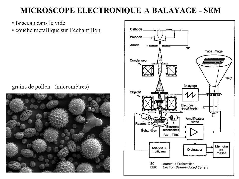 MICROSCOPE ELECTRONIQUE A BALAYAGE - SEM