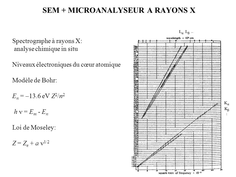 SEM + MICROANALYSEUR A RAYONS X