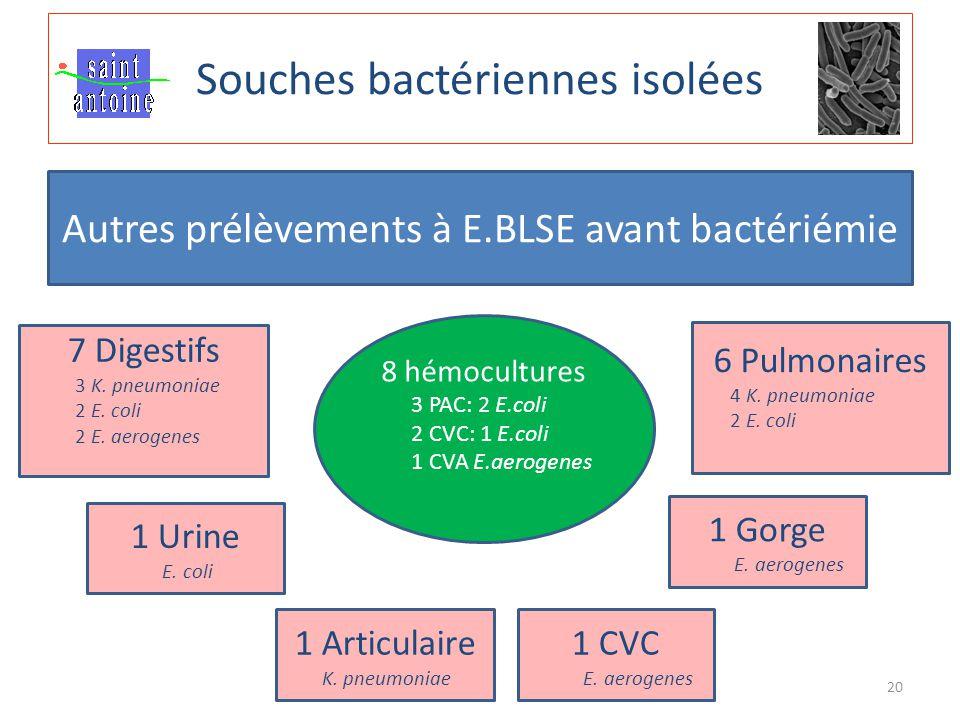Souches bactériennes isolées