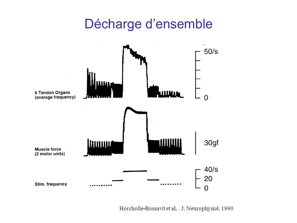 Décharge d'ensemble Horcholle-Bossavit et al, . J. Neurophysiol. 1990