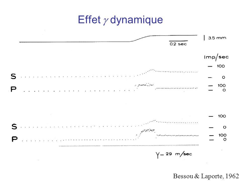 Effet g dynamique Bessou & Laporte, 1962