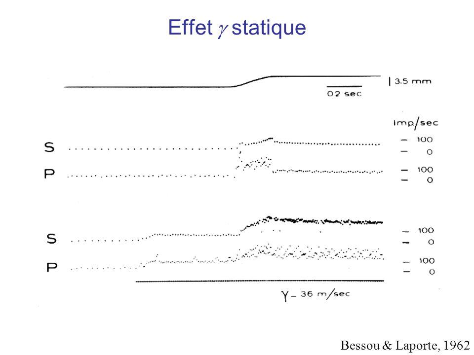 Effet g statique Bessou & Laporte, 1962