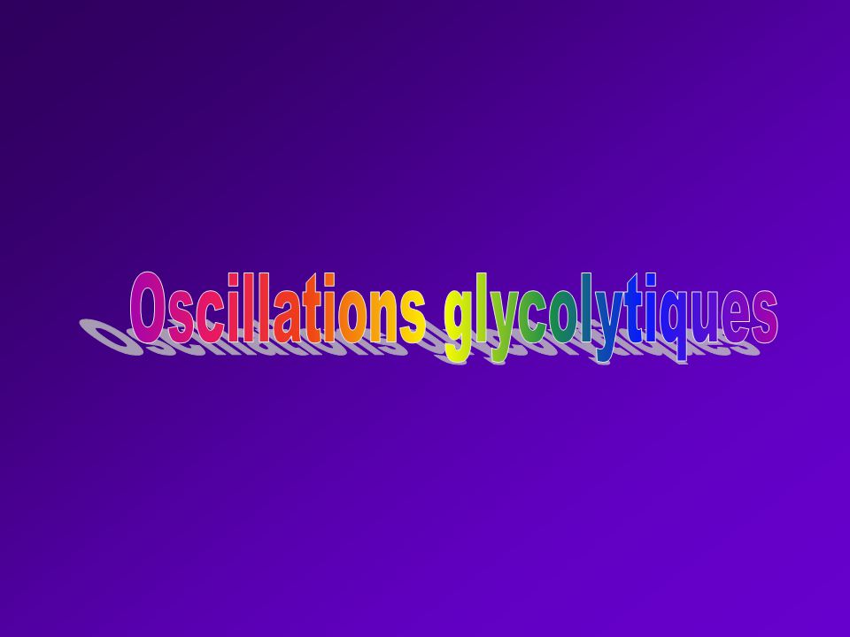 Oscillations glycolytiques