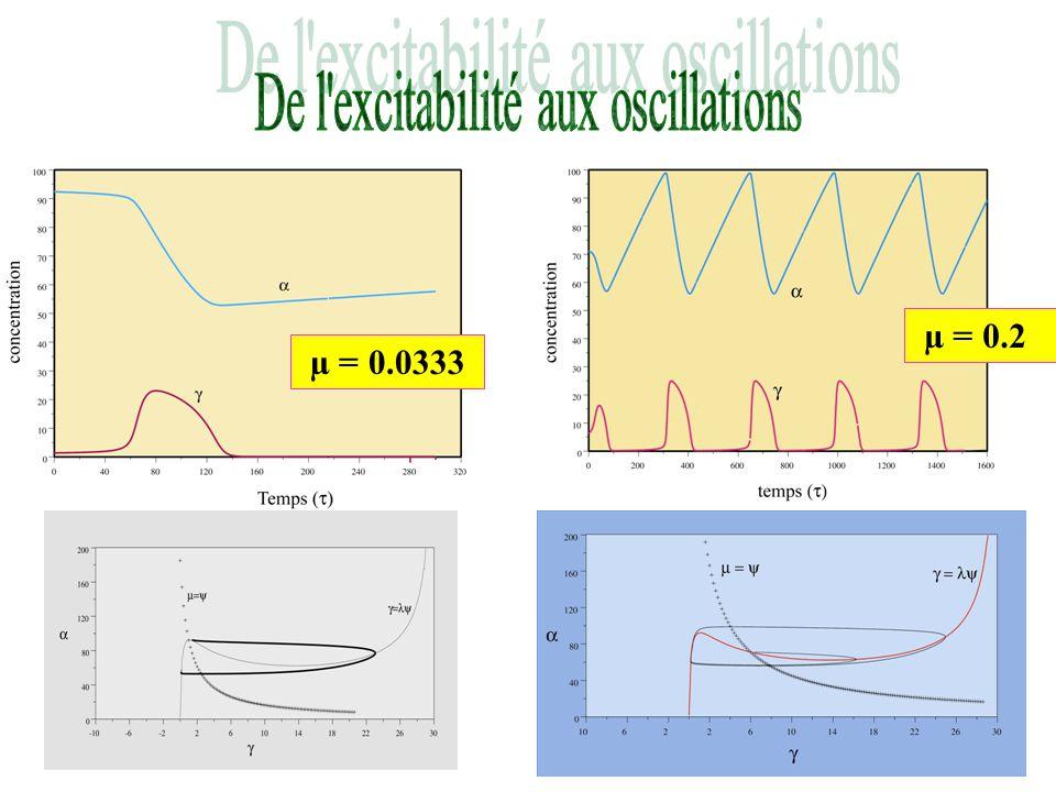 De l excitabilité aux oscillations