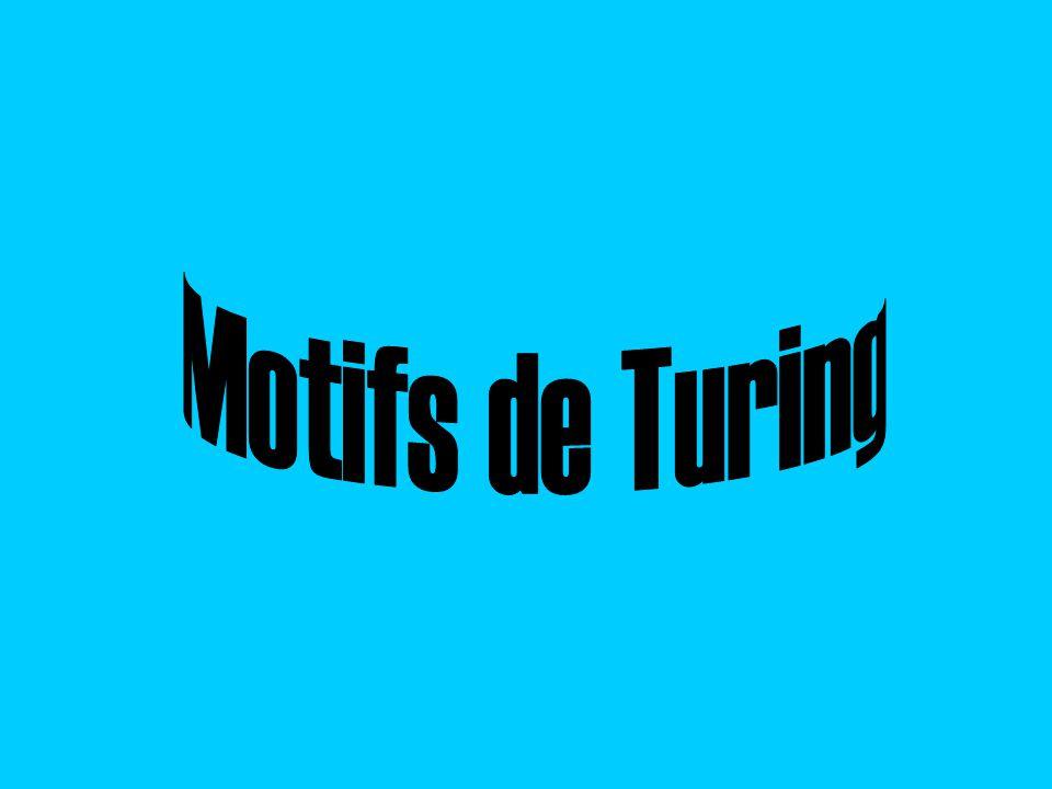Motifs de Turing