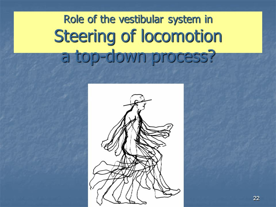 Role of the vestibular system in Steering of locomotion a top-down process