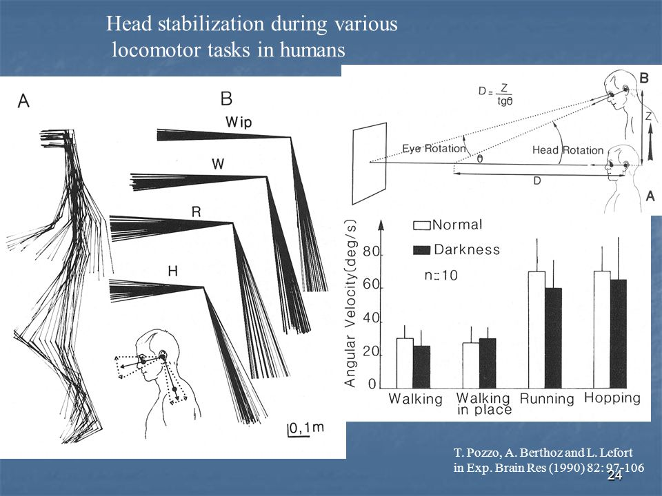 Head stabilization during various locomotor tasks in humans