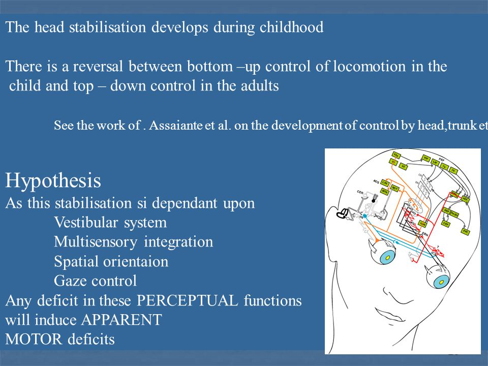 Hypothesis The head stabilisation develops during childhood