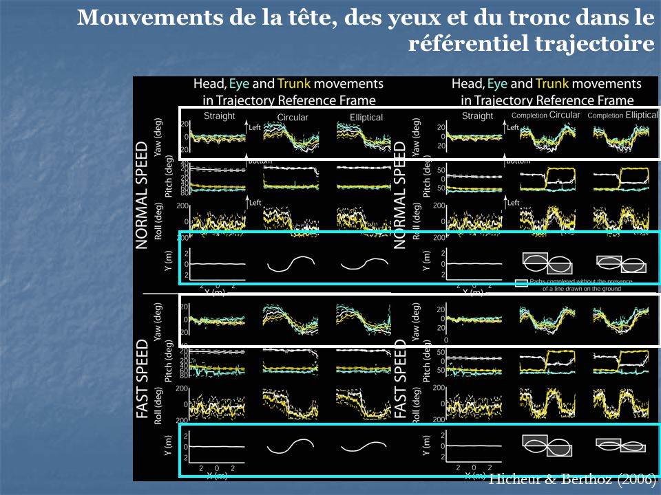 Mouvements de la tête, des yeux et du tronc dans le référentiel trajectoire
