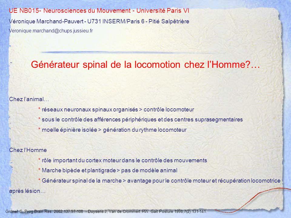 Générateur spinal de la locomotion chez l'Homme …