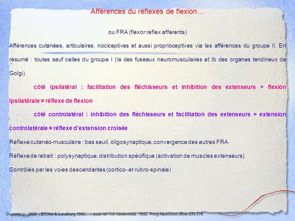 Afférences du réflexes de flexion…