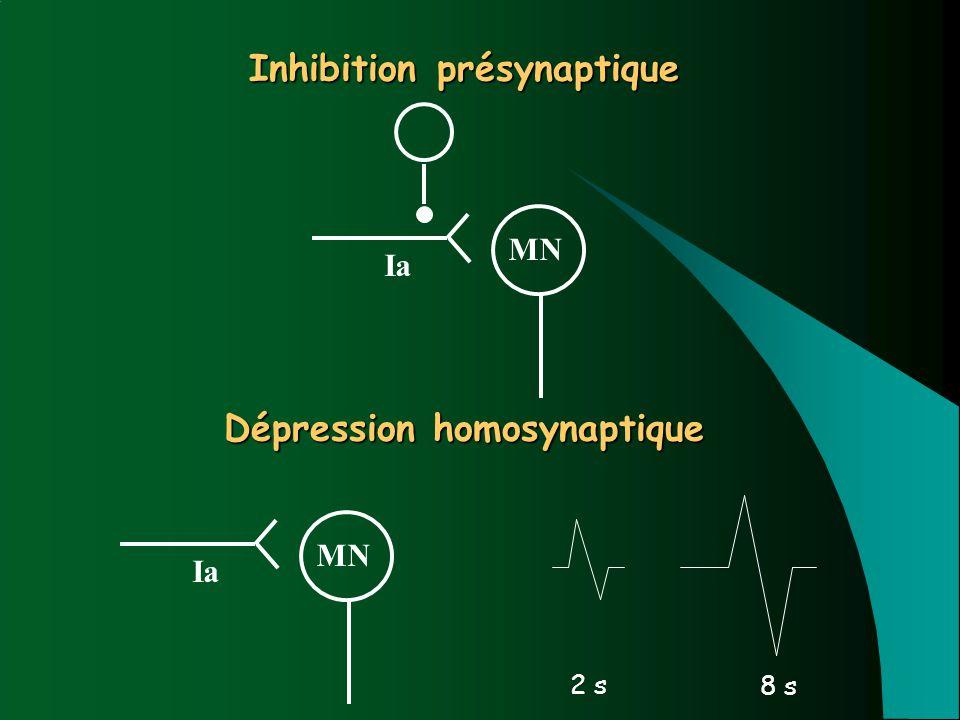 Inhibition présynaptique