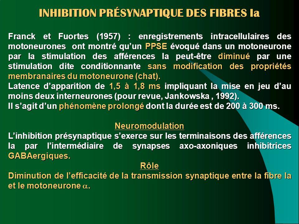 INHIBITION PRÉSYNAPTIQUE DES FIBRES Ia