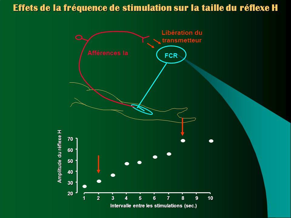Effets de la fréquence de stimulation sur la taille du réflexe H