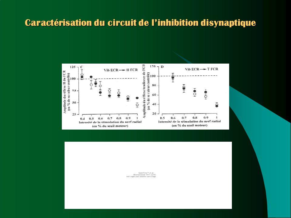 Caractérisation du circuit de l'inhibition disynaptique