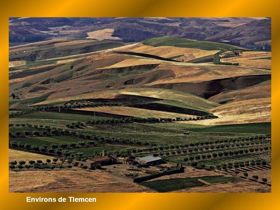 Environs de Tlemcen