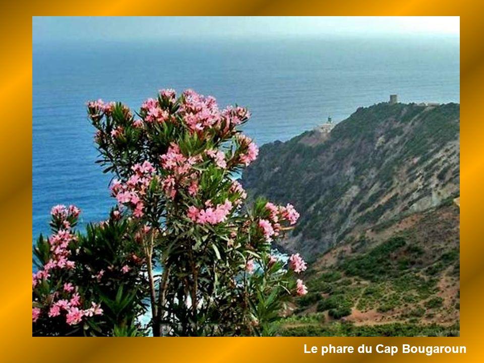 Le phare du Cap Bougaroun
