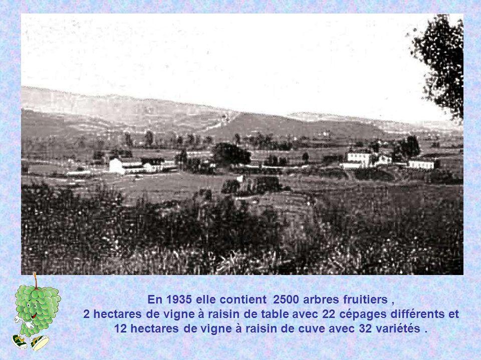 En 1935 elle contient 2500 arbres fruitiers , 2 hectares de vigne à raisin de table avec 22 cépages différents et 12 hectares de vigne à raisin de cuve avec 32 variétés .