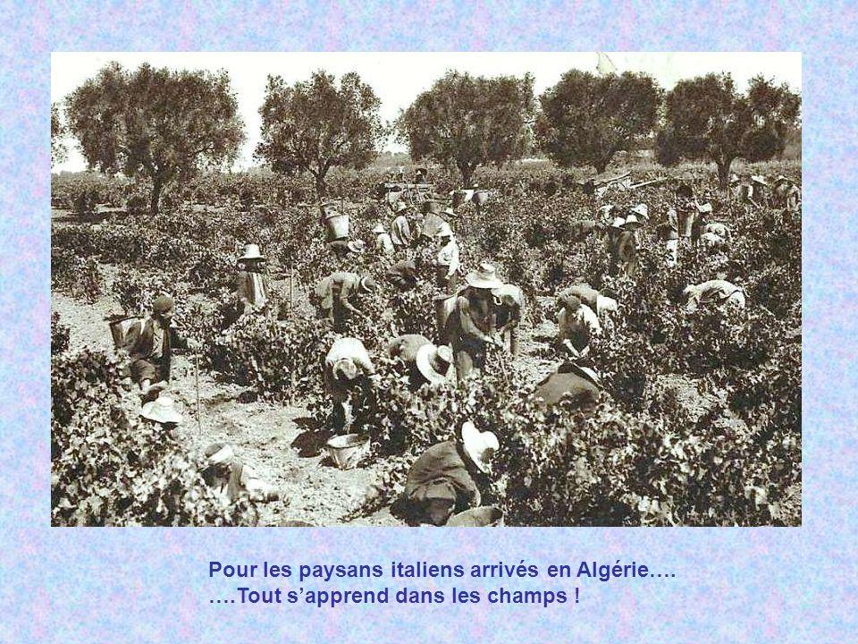 Pour les paysans italiens arrivés en Algérie…. …