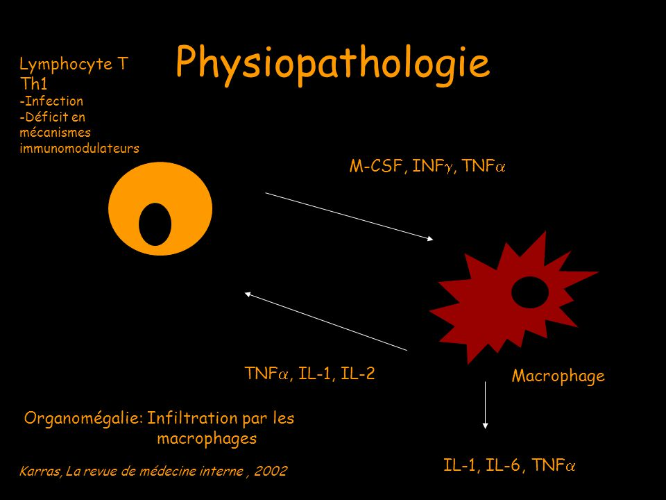 Physiopathologie Lymphocyte T Th1 M-CSF, INF, TNF TNF, IL-1, IL-2