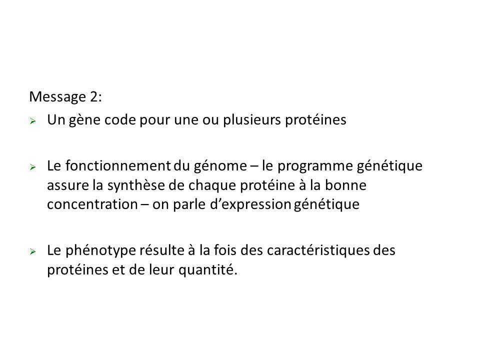 Message 2: Un gène code pour une ou plusieurs protéines.