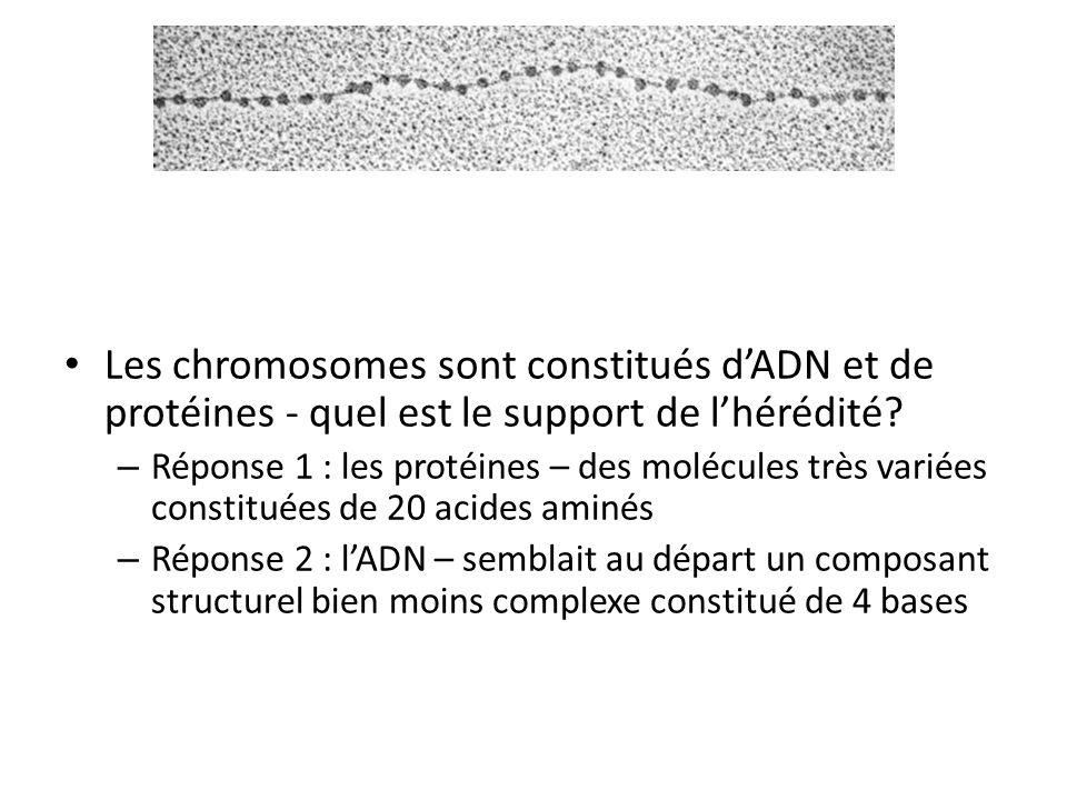 Les chromosomes sont constitués d'ADN et de protéines - quel est le support de l'hérédité