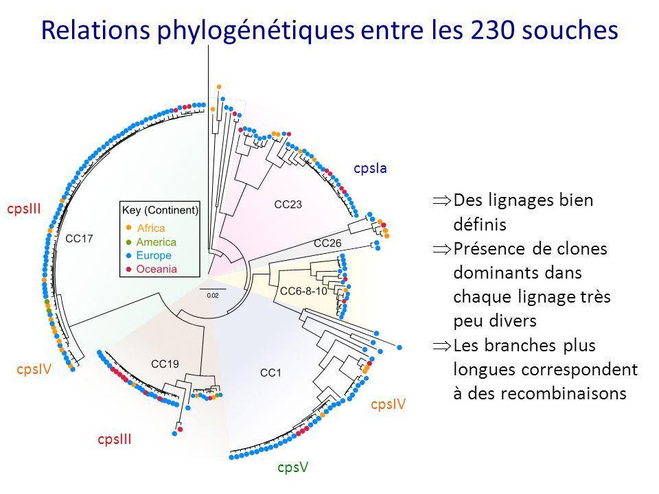 Relations phylogénétiques entre les 230 souches