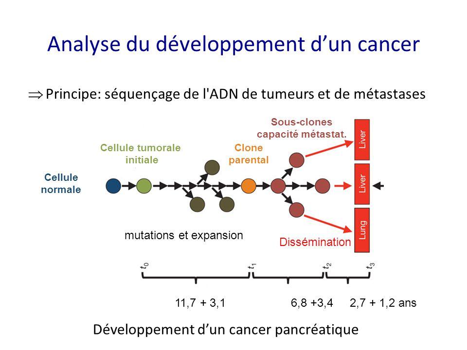 Analyse du développement d'un cancer