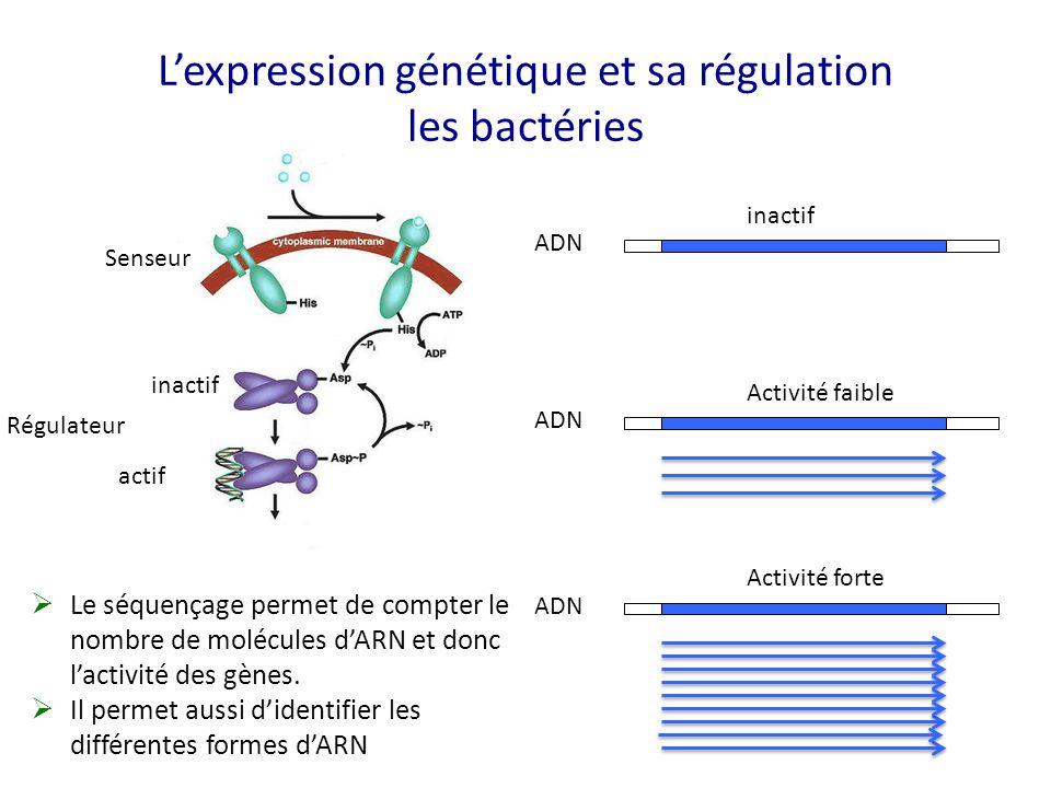 L'expression génétique et sa régulation les bactéries