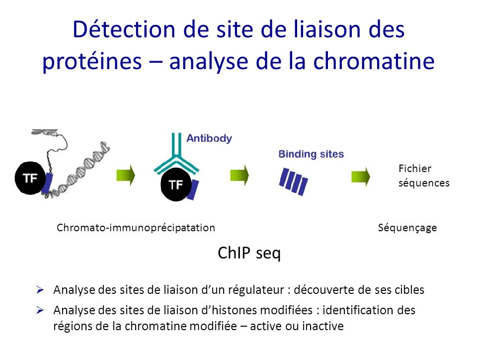 Détection de site de liaison des protéines – analyse de la chromatine