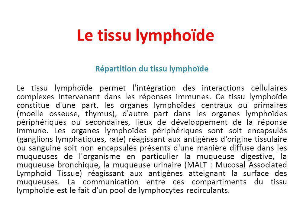 Répartition du tissu lymphoïde